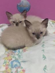 Título do anúncio: Doa-se gatinhos
