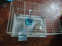 Gaiola para roedores +brinde