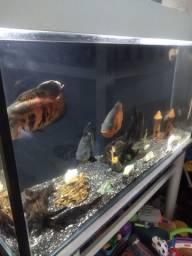 Vendo lindo aquário 300 litros!