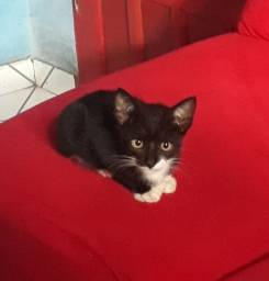 Doacao de gatinho Macho e Fêmea