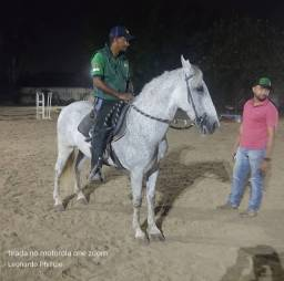 Título do anúncio: Cavalo Castrado Mangalarga Marchador