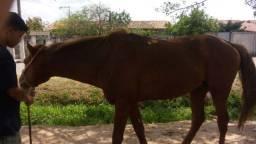 Título do anúncio: Cavalo monso