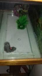 Vendo aquario pra desocupar lugar caixa de madeira inverniza