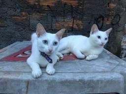 Gatinhas precisando de um lar