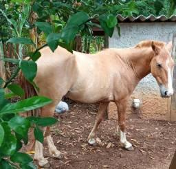 Cavalo Baio