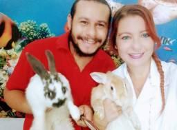 Coelhos para criação - Pet Shop Dos Puffs Delivery