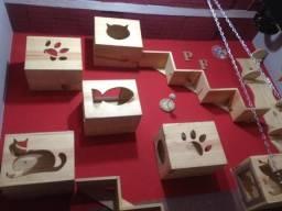 Casas de gatos