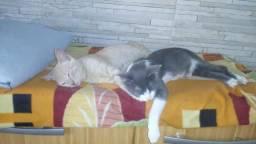 Doa se lindos gatinhos