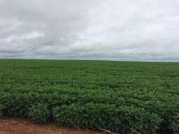 Fazenda rural à venda, 99 alqueires, Mangueirinha.