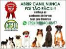 Venha fazer parte dessa familia quer tanto crese no brasil cinobras seu dog em boas mãos